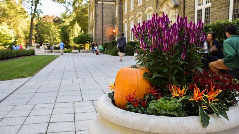 Pumpkins at Sutherland